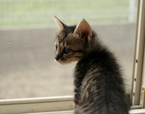 子猫と一緒にのんびり休日_d0355333_16512758.jpg