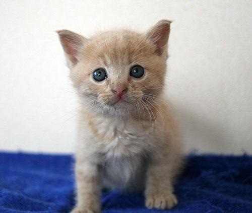 子猫と一緒にのんびり休日_d0355333_16512759.jpg