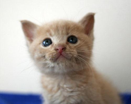 子猫と一緒にのんびり休日_d0355333_16512772.jpg