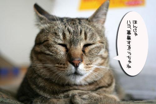 子猫と一緒にのんびり休日_d0355333_16512871.jpg