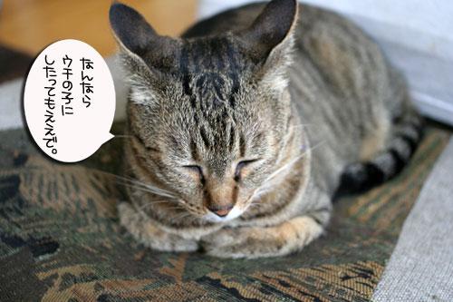 子猫と一緒にのんびり休日_d0355333_16512896.jpg