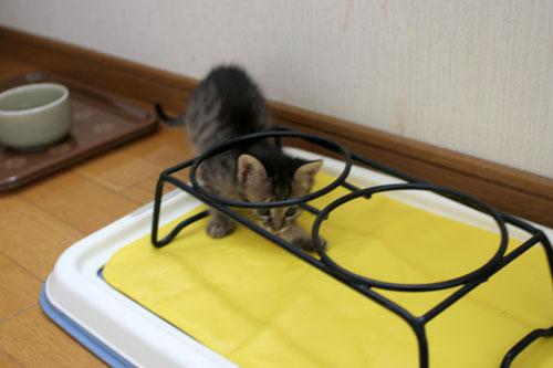 子猫のリンボーダンス?_d0355333_16520800.jpg