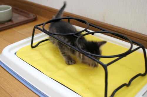 子猫のリンボーダンス?_d0355333_16520811.jpg