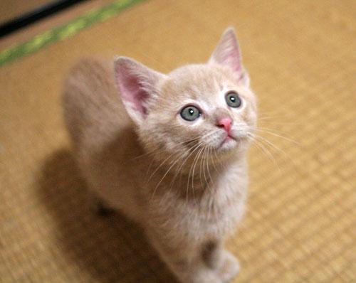 子猫の成長は早い_d0355333_16523310.jpg