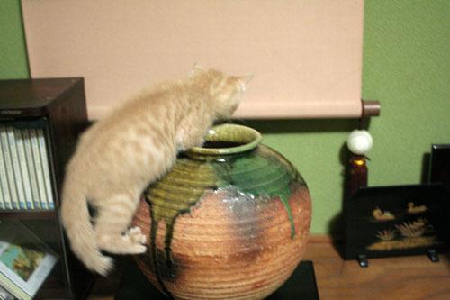 子猫の成長は早い_d0355333_16523328.jpg