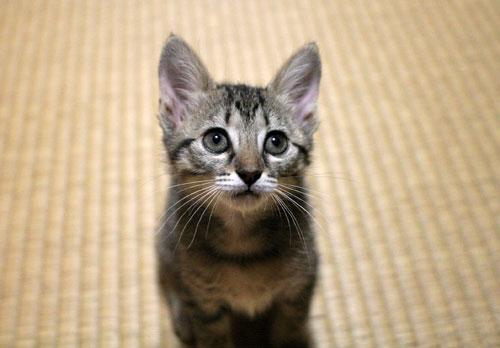 子猫の成長は早い_d0355333_16523331.jpg