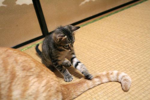 子猫の成長は早い_d0355333_16523421.jpg