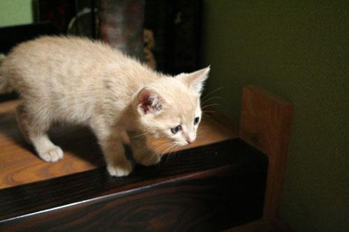 子猫の成長は早い_d0355333_16523462.jpg