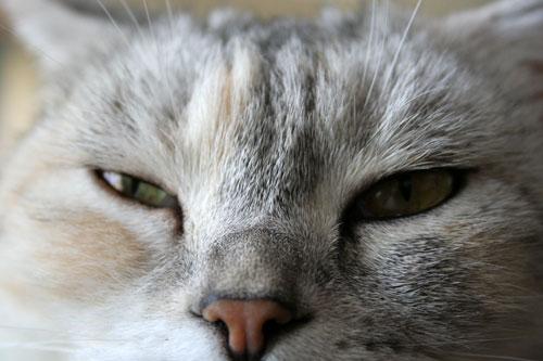 猫もダレる梅雨の中休み_d0355333_16532093.jpg