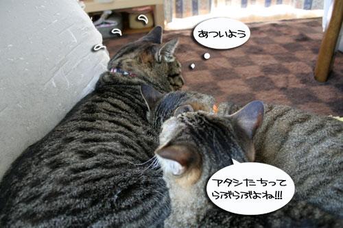 猫もダレる梅雨の中休み_d0355333_16532221.jpg