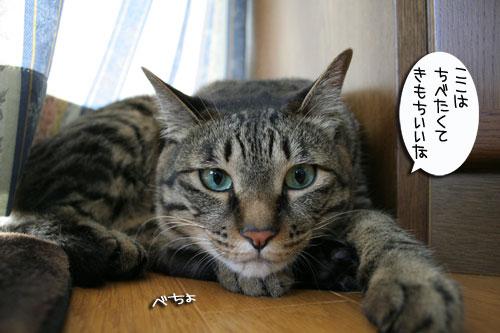 猫もダレる梅雨の中休み_d0355333_16532421.jpg