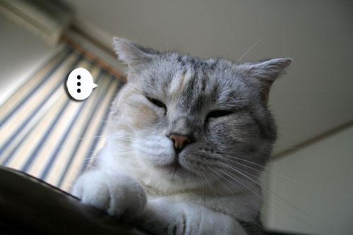 猫もダレる梅雨の中休み_d0355333_16532434.jpg