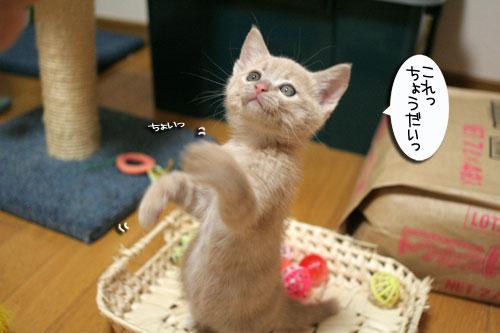 おもちゃの遊び方いろいろ_d0355333_16533879.jpg