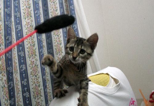 子猫祭り、おやじ祭り_d0355333_16535631.jpg