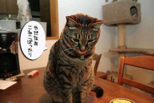 子猫祭り、おやじ祭り_d0355333_16535708.jpg