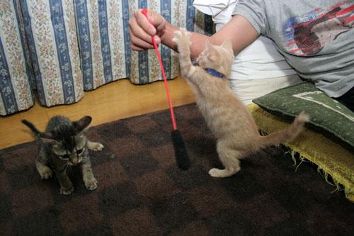 子猫祭り、おやじ祭り_d0355333_16535714.jpg