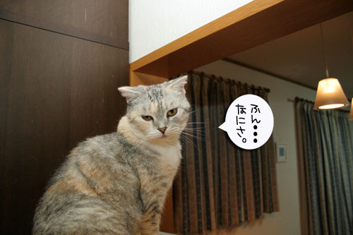 子猫祭り、おやじ祭り_d0355333_16535721.jpg