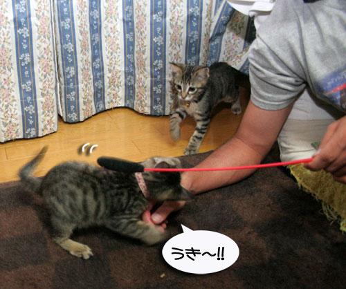 子猫祭り、おやじ祭り_d0355333_16535790.jpg