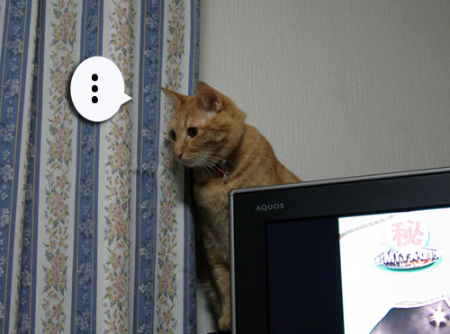 子猫祭り、おやじ祭り_d0355333_16535870.jpg