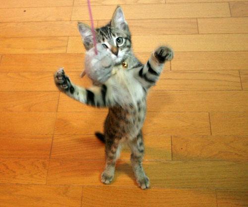子猫祭り、おやじ祭り_d0355333_16535873.jpg