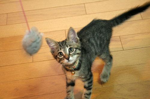 子猫祭り、おやじ祭り_d0355333_16535876.jpg