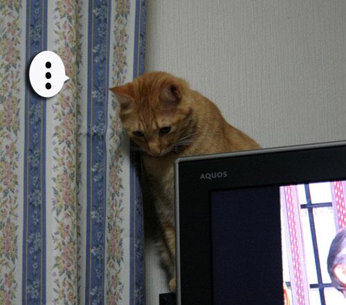 子猫祭り、おやじ祭り_d0355333_16535879.jpg