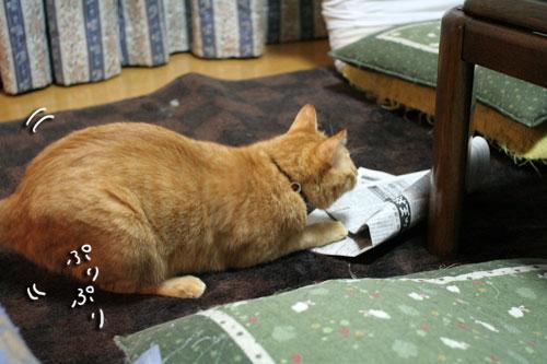 子猫祭り、おやじ祭り_d0355333_16535902.jpg