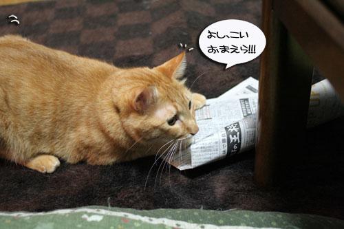 子猫祭り、おやじ祭り_d0355333_16535972.jpg