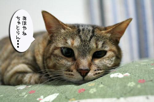 子猫祭り、おやじ祭り_d0355333_16535979.jpg