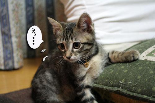 子猫祭り、おやじ祭り_d0355333_16535981.jpg