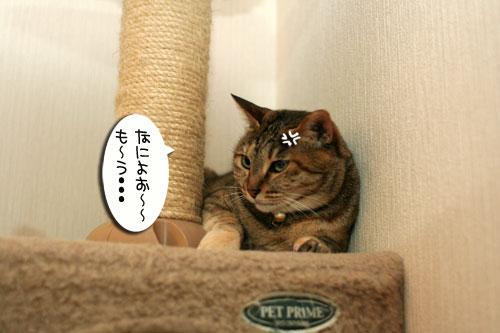 新しいタワーさん★こんにちは前編_d0355333_16543183.jpg