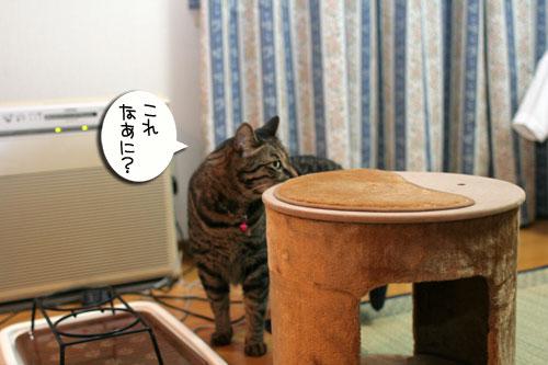 新しいタワーさん★こんにちは前編_d0355333_16543236.jpg