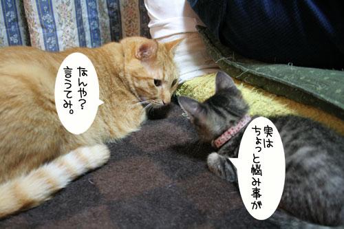 子猫に人気_d0355333_16543611.jpg