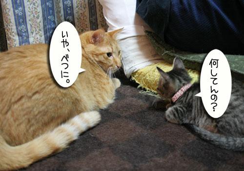子猫に人気_d0355333_16543628.jpg