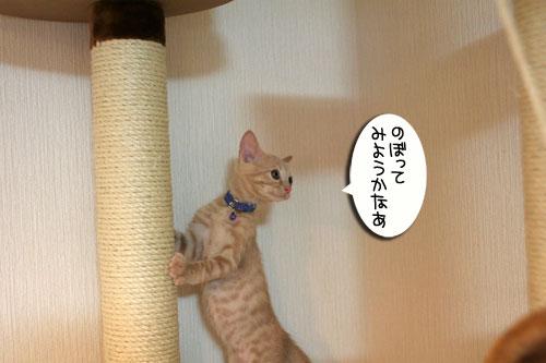 子猫の成長を感じる時_d0355333_16550341.jpg
