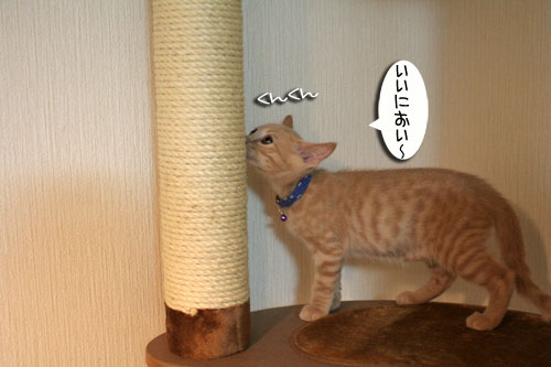 子猫の成長を感じる時_d0355333_16550342.jpg