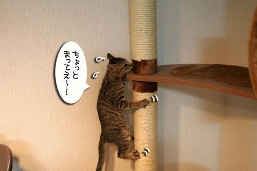 子猫の成長を感じる時_d0355333_16550427.jpg
