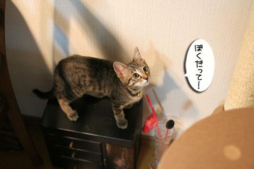 子猫の成長を感じる時_d0355333_16550460.jpg