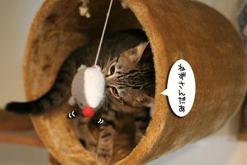 子猫の成長を感じる時_d0355333_16550462.jpg