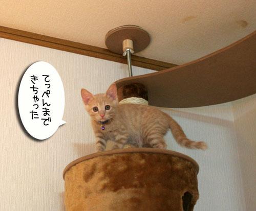 子猫の成長を感じる時_d0355333_16550511.jpg