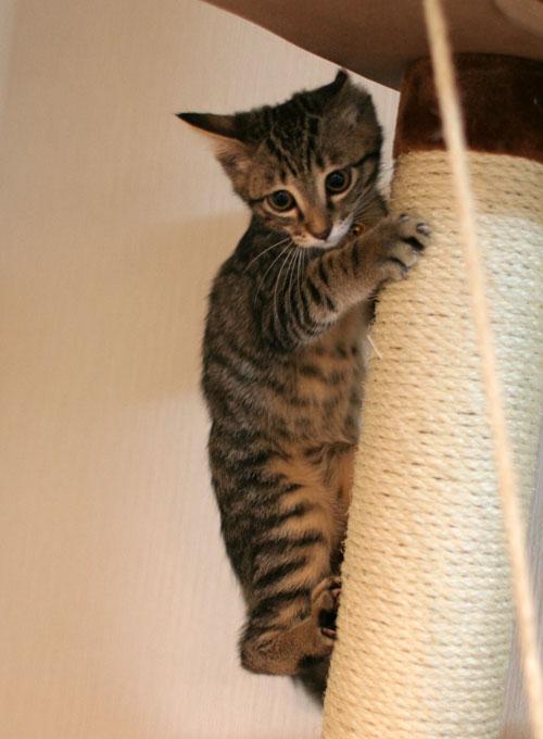 子猫の成長を感じる時_d0355333_16550555.jpg
