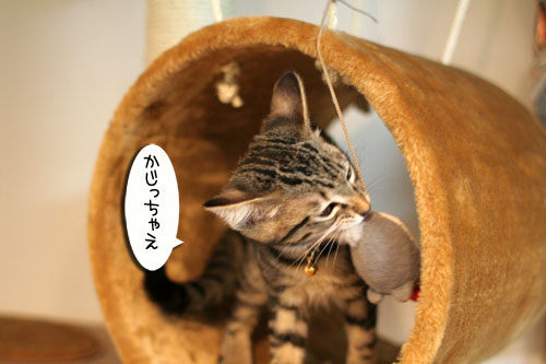 子猫の成長を感じる時_d0355333_16550583.jpg
