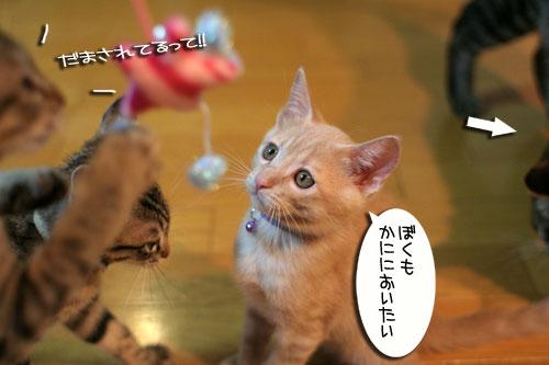 新しいおもちゃに突撃!_d0355333_16551105.jpg