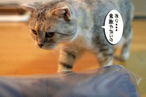 New猫ベッド争奪戦★前編_d0355333_16561518.jpg