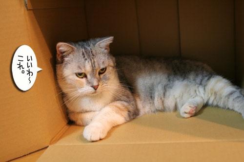New猫ベッド争奪戦★前編_d0355333_16561538.jpg