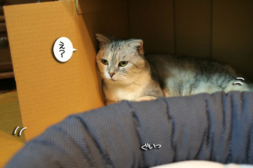 New猫ベッド争奪戦★前編_d0355333_16561661.jpg