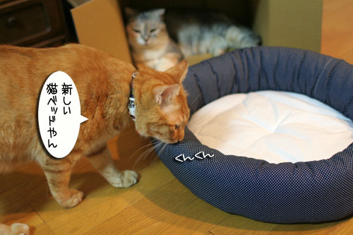 New猫ベッド争奪戦★前編_d0355333_16561785.jpg