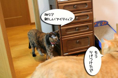New猫ベッド争奪戦★前編_d0355333_16561846.jpg