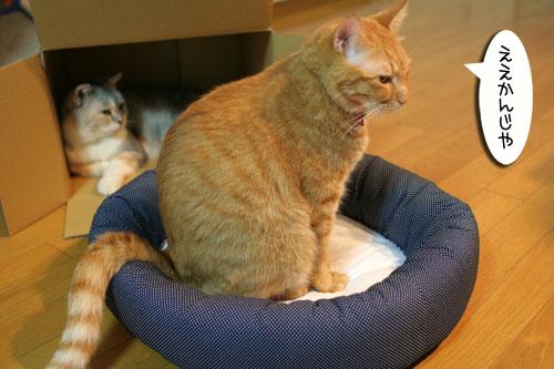 New猫ベッド争奪戦★前編_d0355333_16561873.jpg