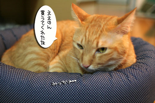 New猫ベッド争奪戦★前編_d0355333_16561946.jpg